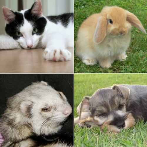 Animales domesticados