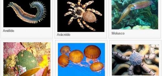 Tipos de invertebrados