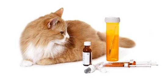 Gato medicina