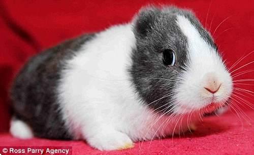 Las orejas de los conejos