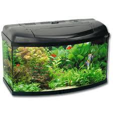 Aquamaniatico tipos de acuarios for Cuidados acuario agua fria
