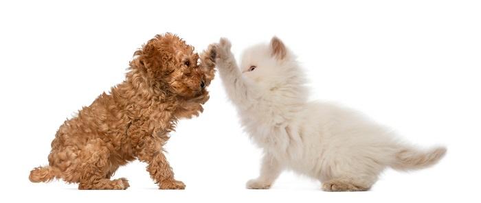 Perro y gato amigos