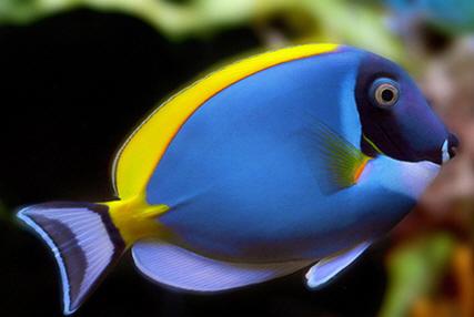 imagenes de pez: