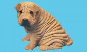 Foto de un shar pei, perro arrugas
