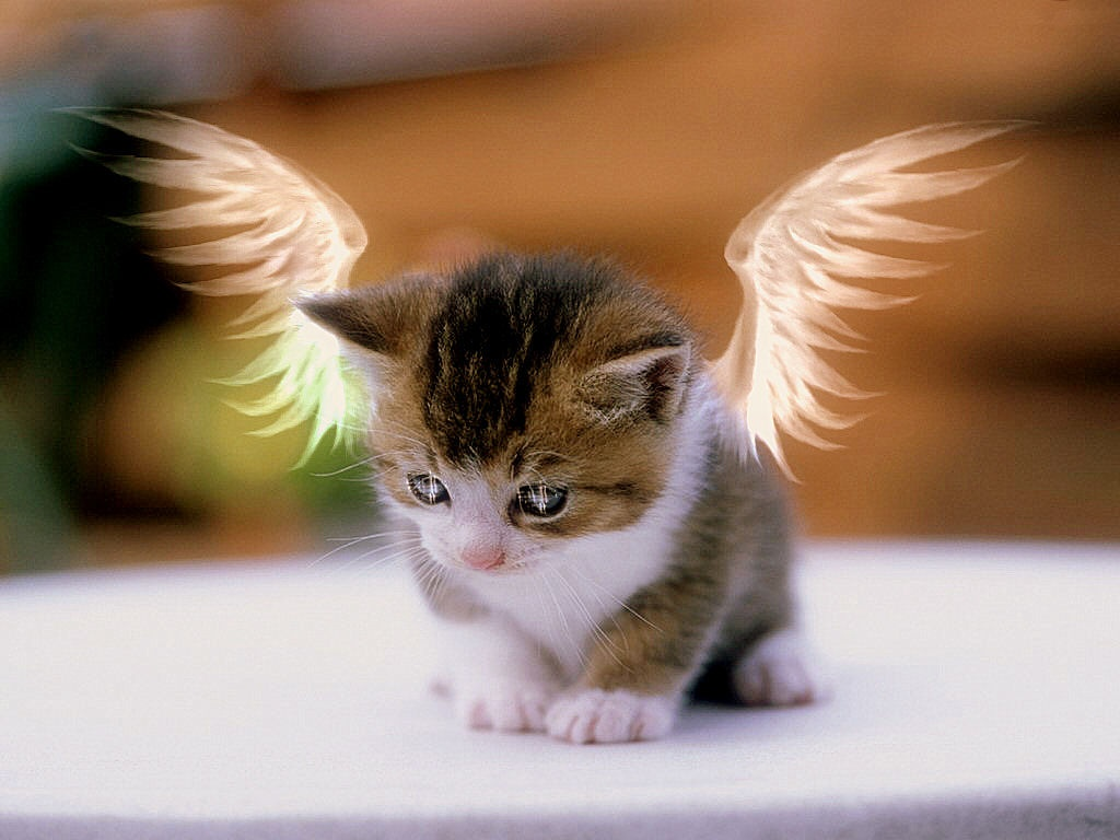 angel-kitty