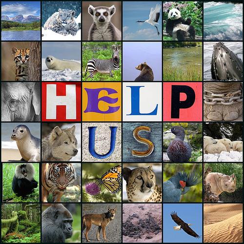 animal_extinction1