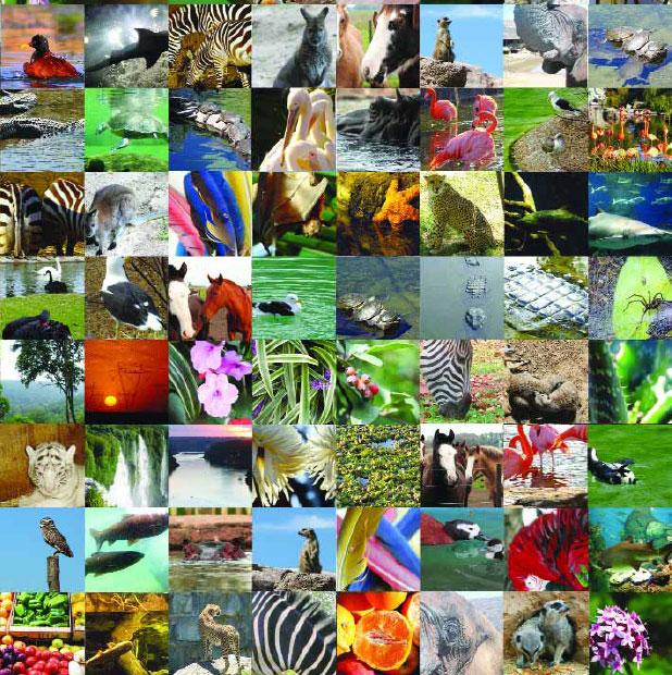 animales_planeta