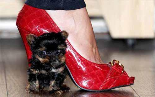 belle y zapato