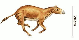 cambio-de-temperatura-de-los-mamiferos-es-causado-por-los-cambios-climaticos