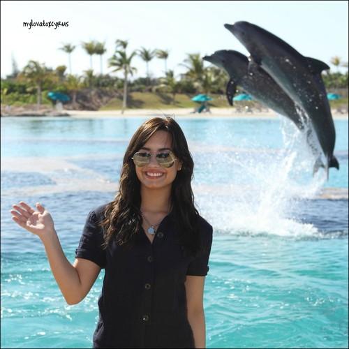 delfines saltando1