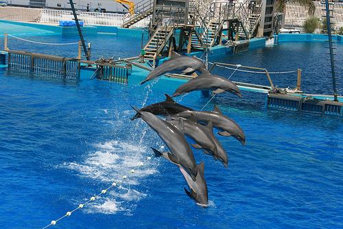 delfines saltando3