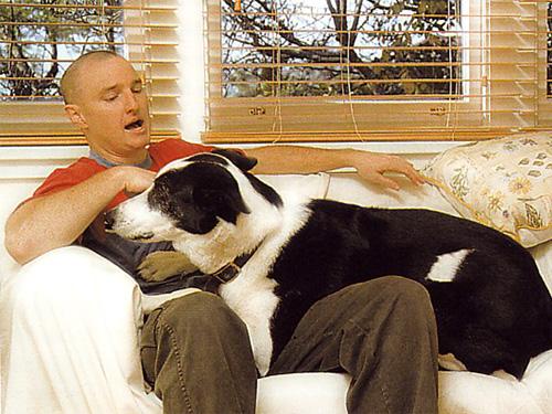 V nculos familiares diario animales - Perros para tener en casa ...