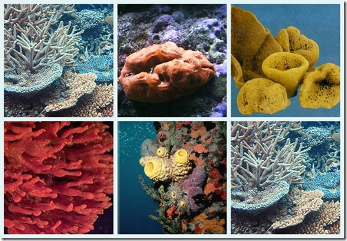 esponjas-de-mar