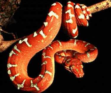 foto de serpiente 1