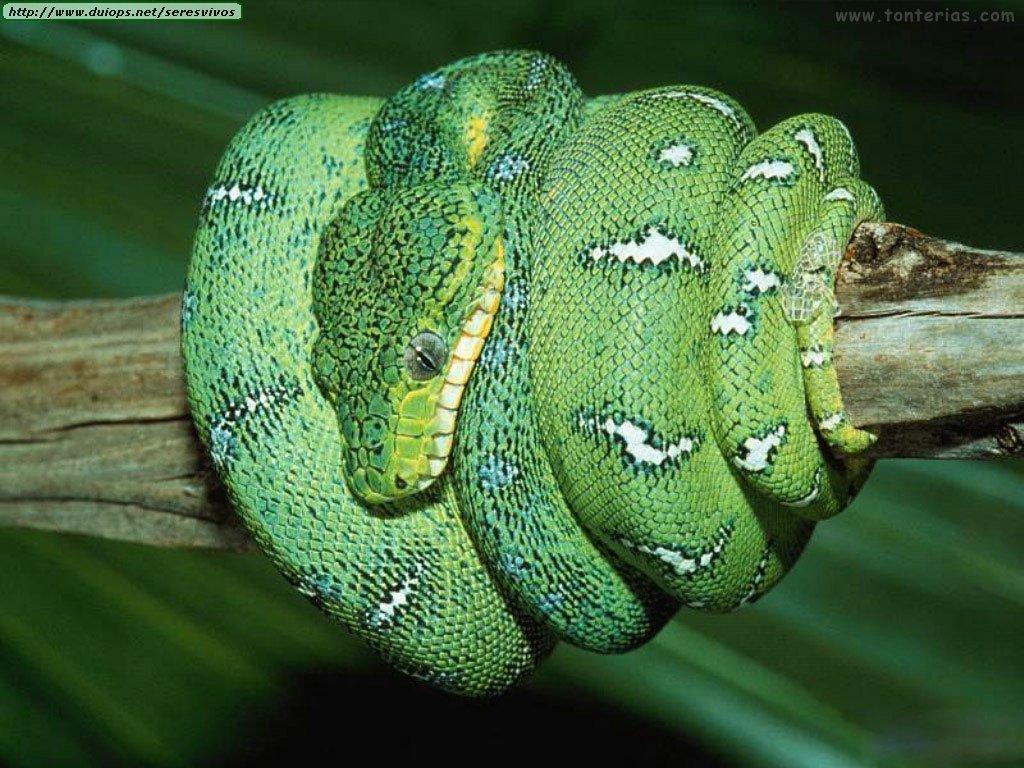foto de serpiente 2