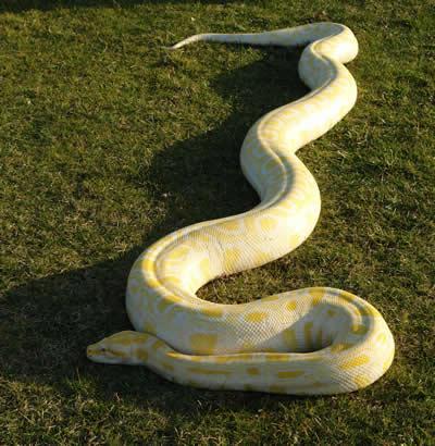 foto de serpiente 3