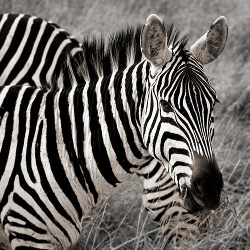 fotografia animales salvajes2