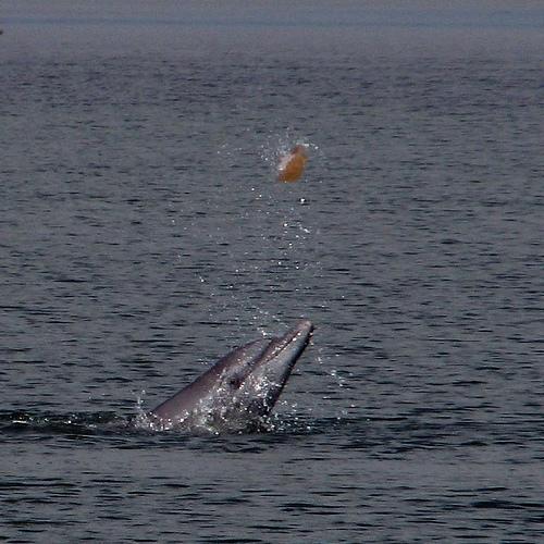 fotos de delfines1