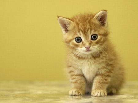 fotos-gatos-1