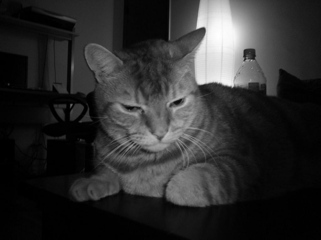 gato-loco