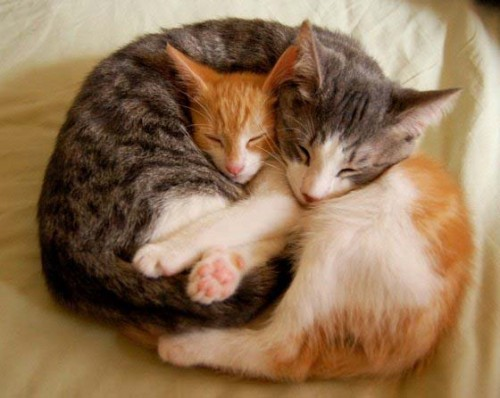 gatos-tiernos