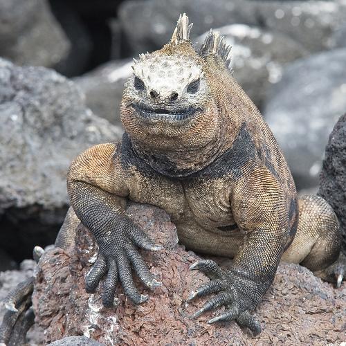 Q Son Los Reptiles Los reptiles son un grupo de