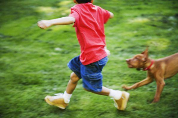 Mascotas y los cuidados