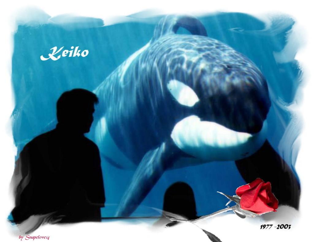 memory-of-keiko-free-willy