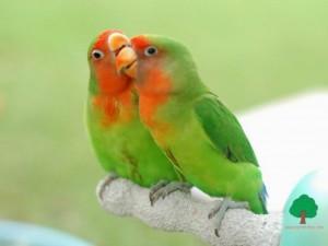 птицы фото попугаи