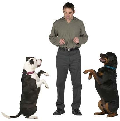 Trucos para mascotas