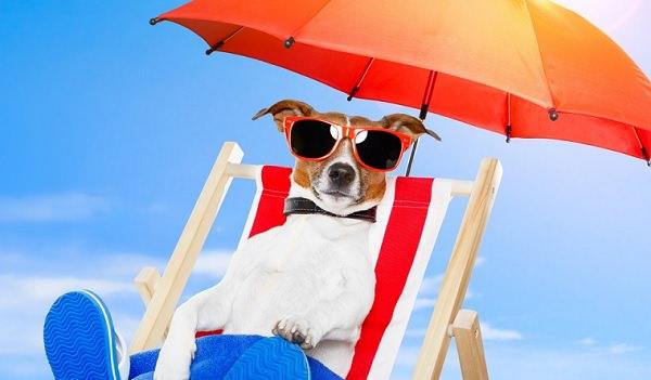 perro verano