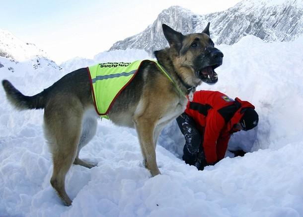 y rescate perro:
