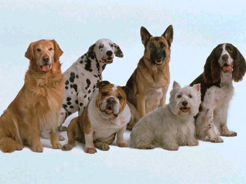 perros2