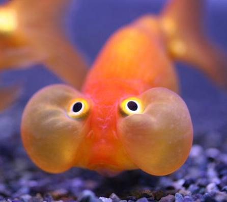 15 Curiosidades sobre los peces