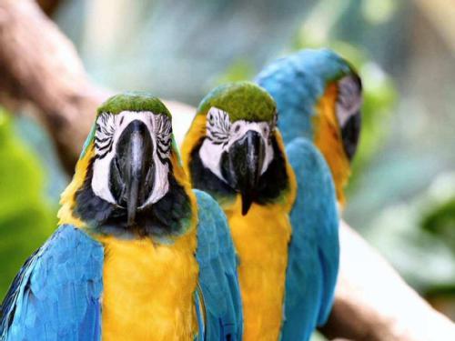 Aves en peligro