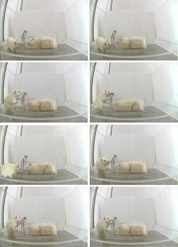 ratassolidarias