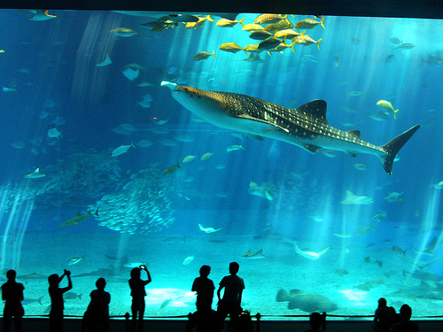 tiburon gigante
