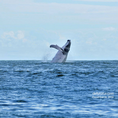 Fotos de animales marinos3