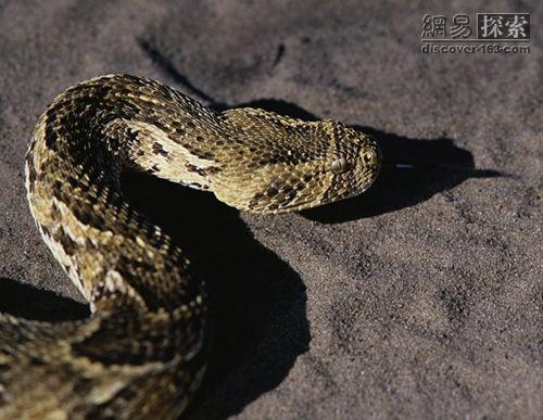 Serpiente venenosa