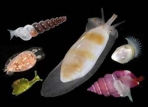 animales-moluscos