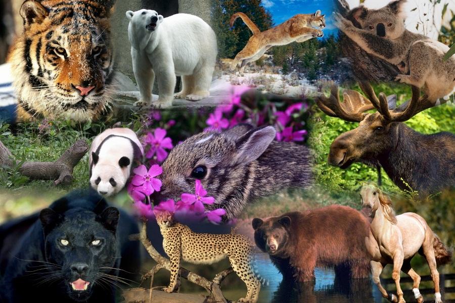 animales-salvajes1
