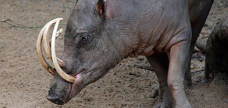 Animales salvajes diario animales part 2 - Animales salvajes apareandose ...
