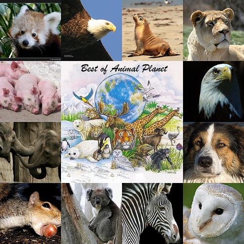 best-animal-planet