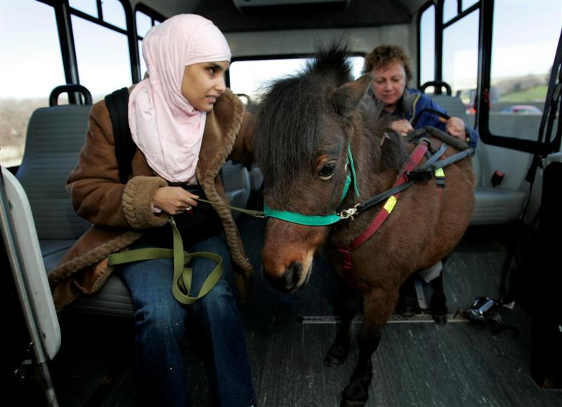caliguidehorse