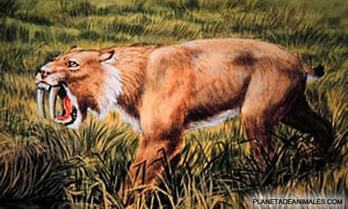 el-tigre-dientes-de-sable