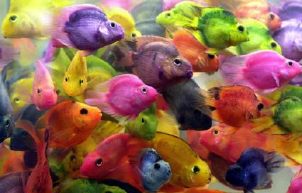 fotos de peces1