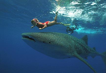 Fotos de tiburones diario animales - Bagno con gli squali sudafrica ...