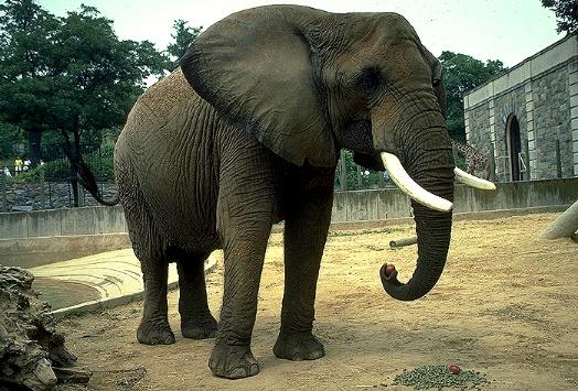 imagenes de elefantes1