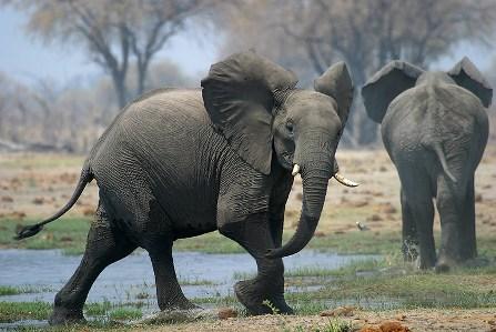 imagenes de elefantes2