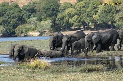 imagenes de elefantes3